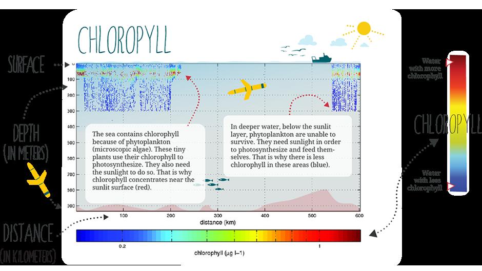 Chloropyll Information
